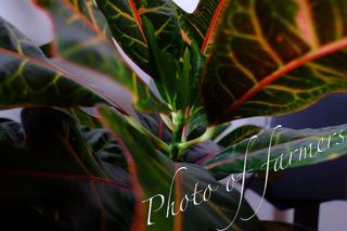 DSCF2120 copy.jpg