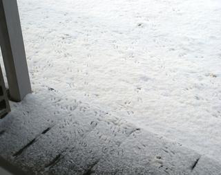 0417footprints.jpg
