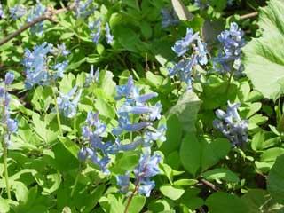 0512flower1_s.jpg